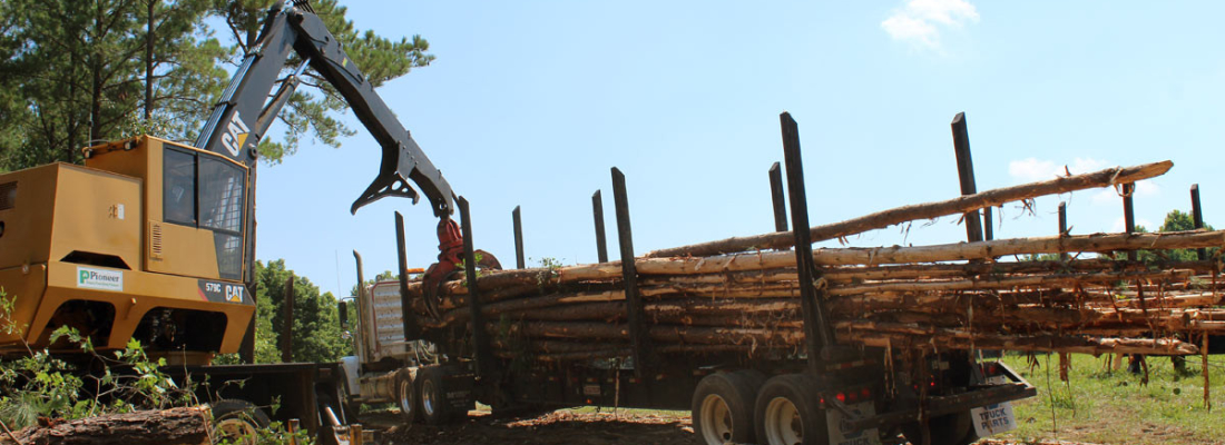 sell your trees and timber in NC and VA