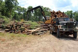 timber harvest loader-in-granville