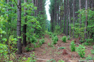 NC and VA Timber Harvesting, Thinning and Forestry