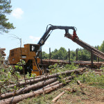 sell your trees and timber for profit in North Carolina and Virginia