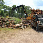 forestry management, logging and timber harvesting in NC and VA